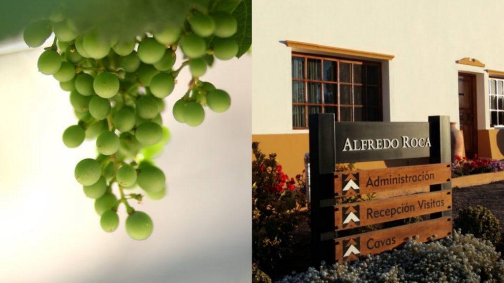 La bodega Alfredo Roca renovó en Argentina su línea de vinos Roca