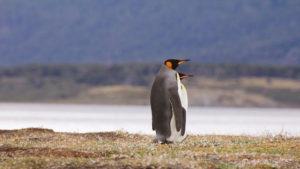Ushuaia en imágenes