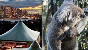 Propuestas originales en Sídney: dormir en el zoológico Taronga
