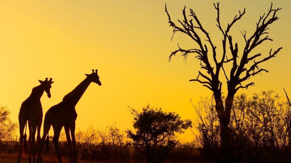 La información que hay que saber si viajamos a Sudáfrica con niños