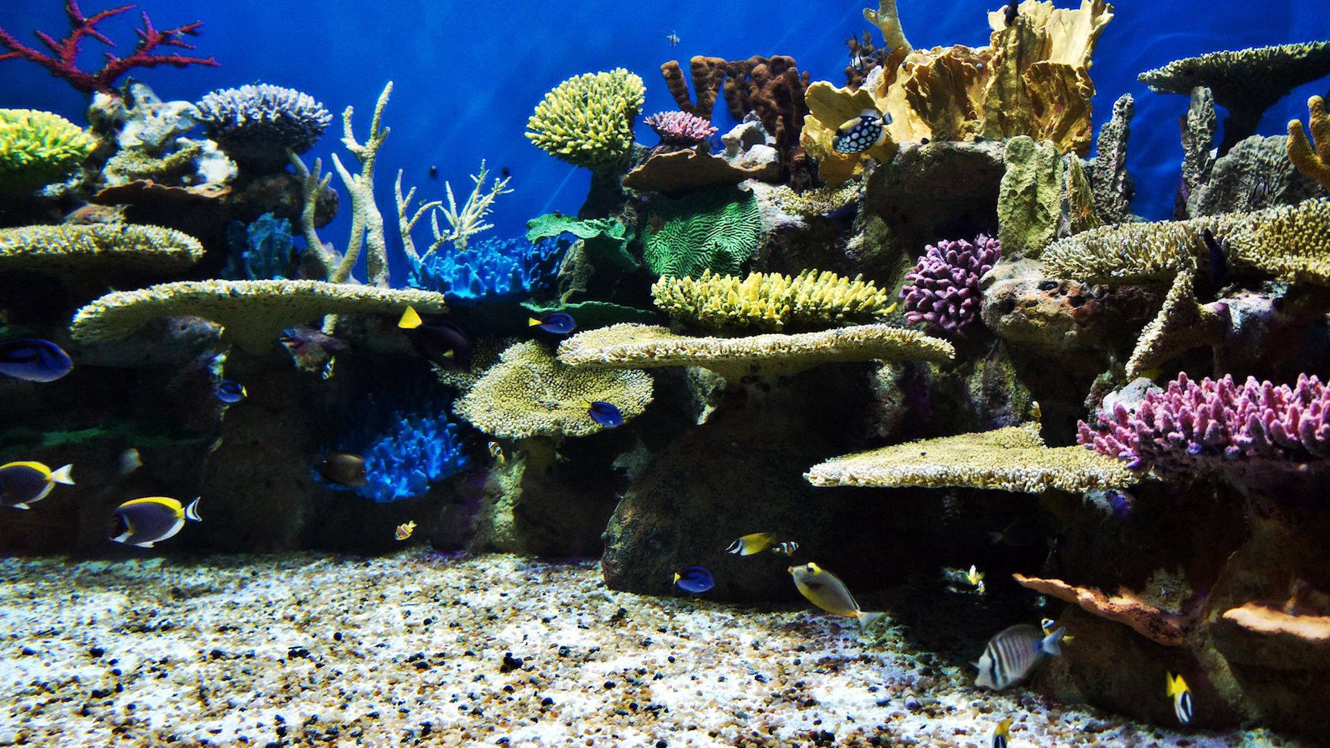 Inauguró en Río de Janeiro el acuario más grande de Sudamérica: AquaRio
