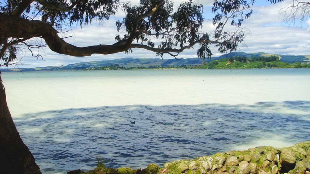 Rotorua, un destino lleno de atractivos en Nueva Zelanda, en imágenes