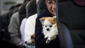 Viajar con perros en la cabina del avión ahora es posible, y la iniciativa es un éxito