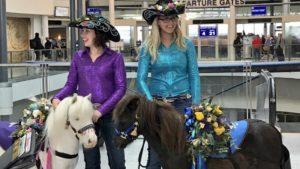La nueva tendencia en los aeropuertos: animales para calmar la ansiedad
