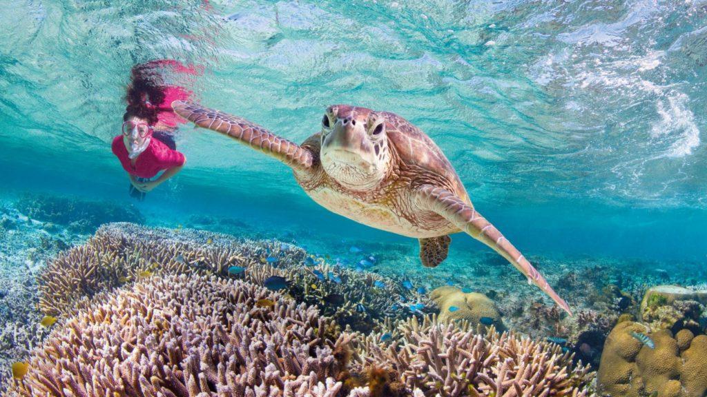 La Gran Barrera de Coral de Australia tiene precio. ¿Cuál es?