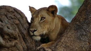 ¿Cuál es el mejor país de África para ir de safari?