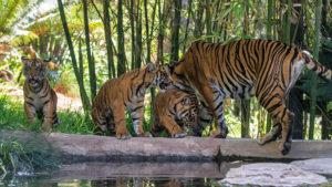 Estos son los 10 mejores zoológicos de Estados Unidos