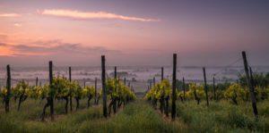 Seis destinos del mundo para los amantes del vino: uno de ellos, en Sudamérica