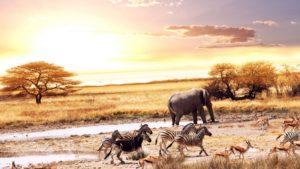 Los mejores países del mundo para los amantes de los animales: cinco de ellos en Latinoamérica