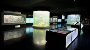 Así es el acuario de agua dulce más grande de Argentina