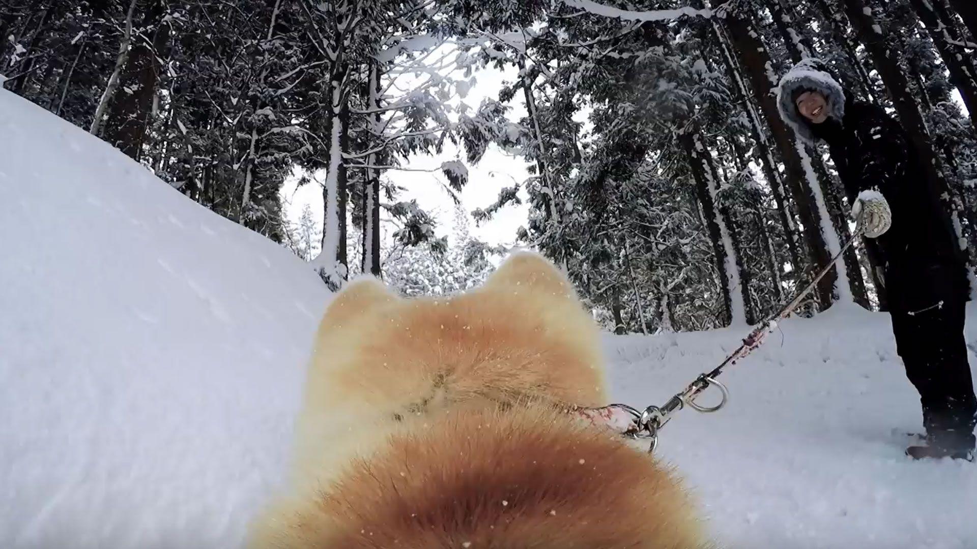 Google Street View desde la perspectiva de un perro