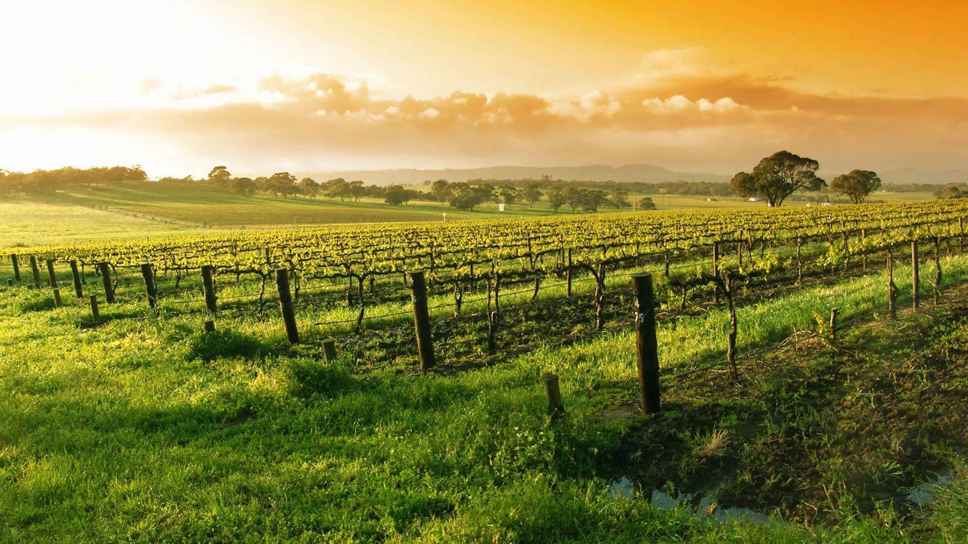Los destinos más populares para los amantes del vino