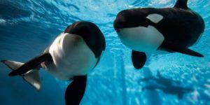 Dejarán de vender entradas para SeaWorld y otros parques con animales