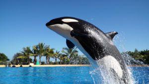 ¿Cuál es el mejor zoológico del mundo? Está en España