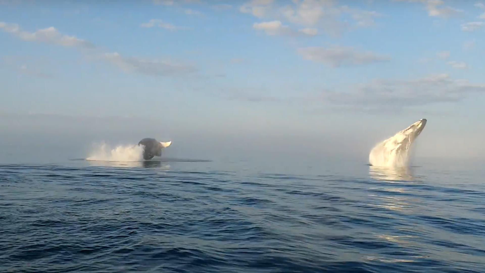 VIDEO Cuando el avistamiento de ballenas supera todas las expectativas