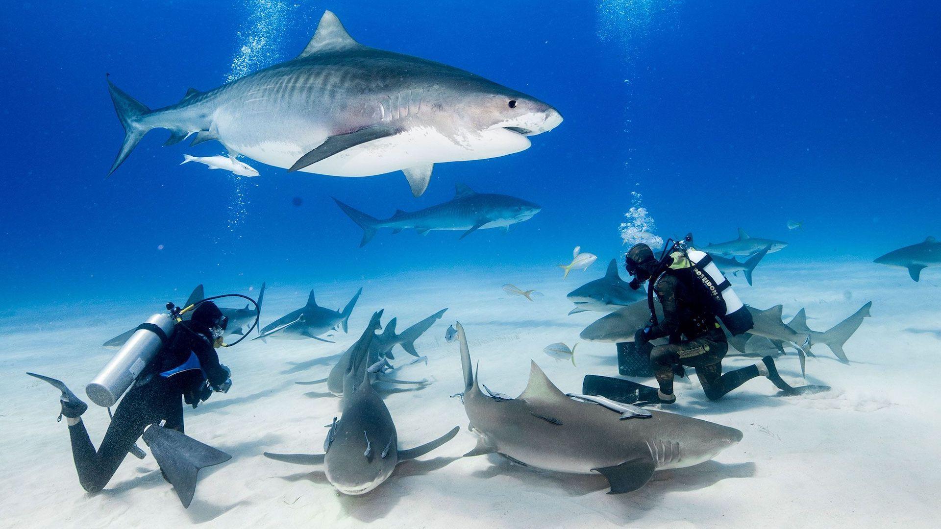 ¿Cuáles son los mejores destinos para nadar con tiburones?