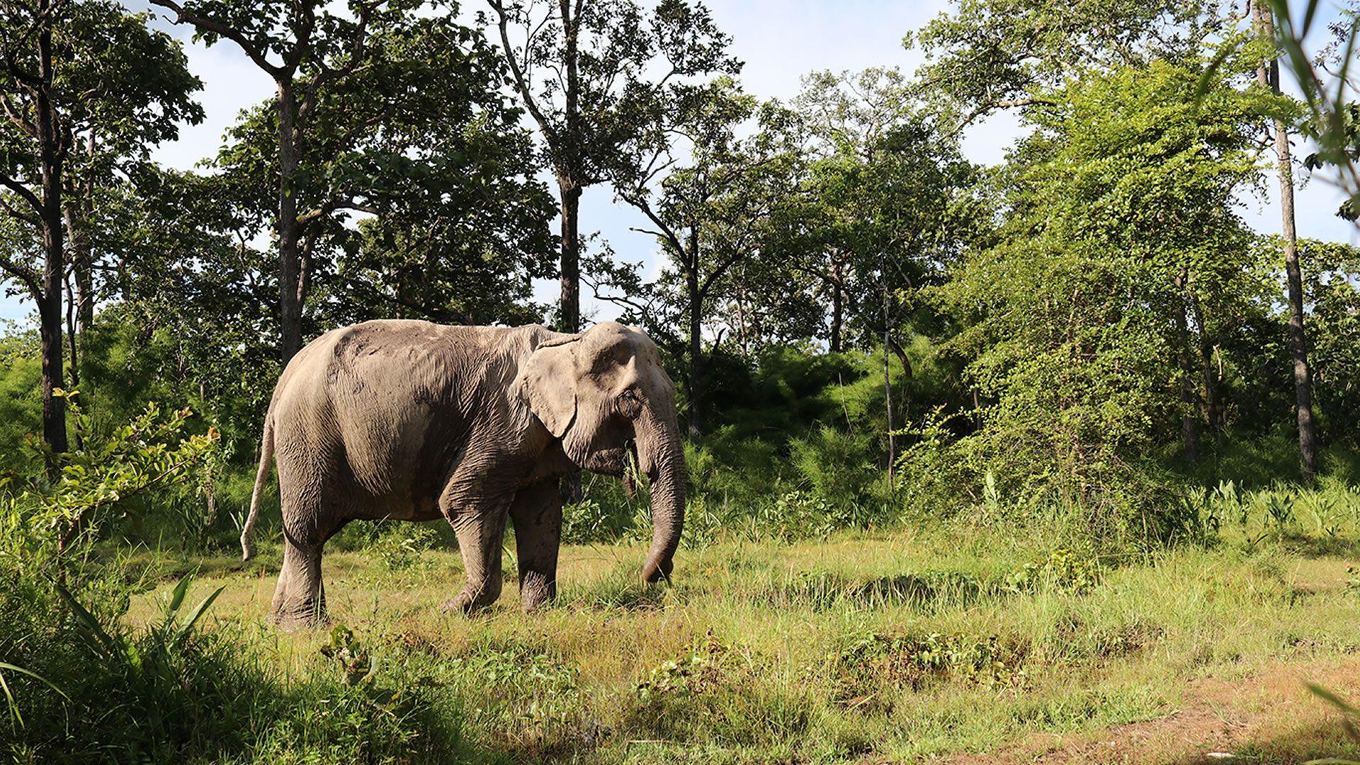 Subir a un elefante, una tendencia que va camino a desaparecer