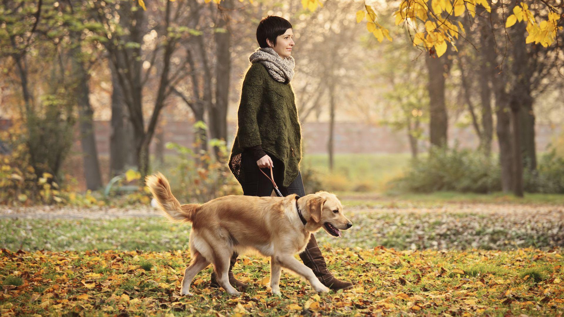 Los mejores destinos del mundo para viajar con mascotas