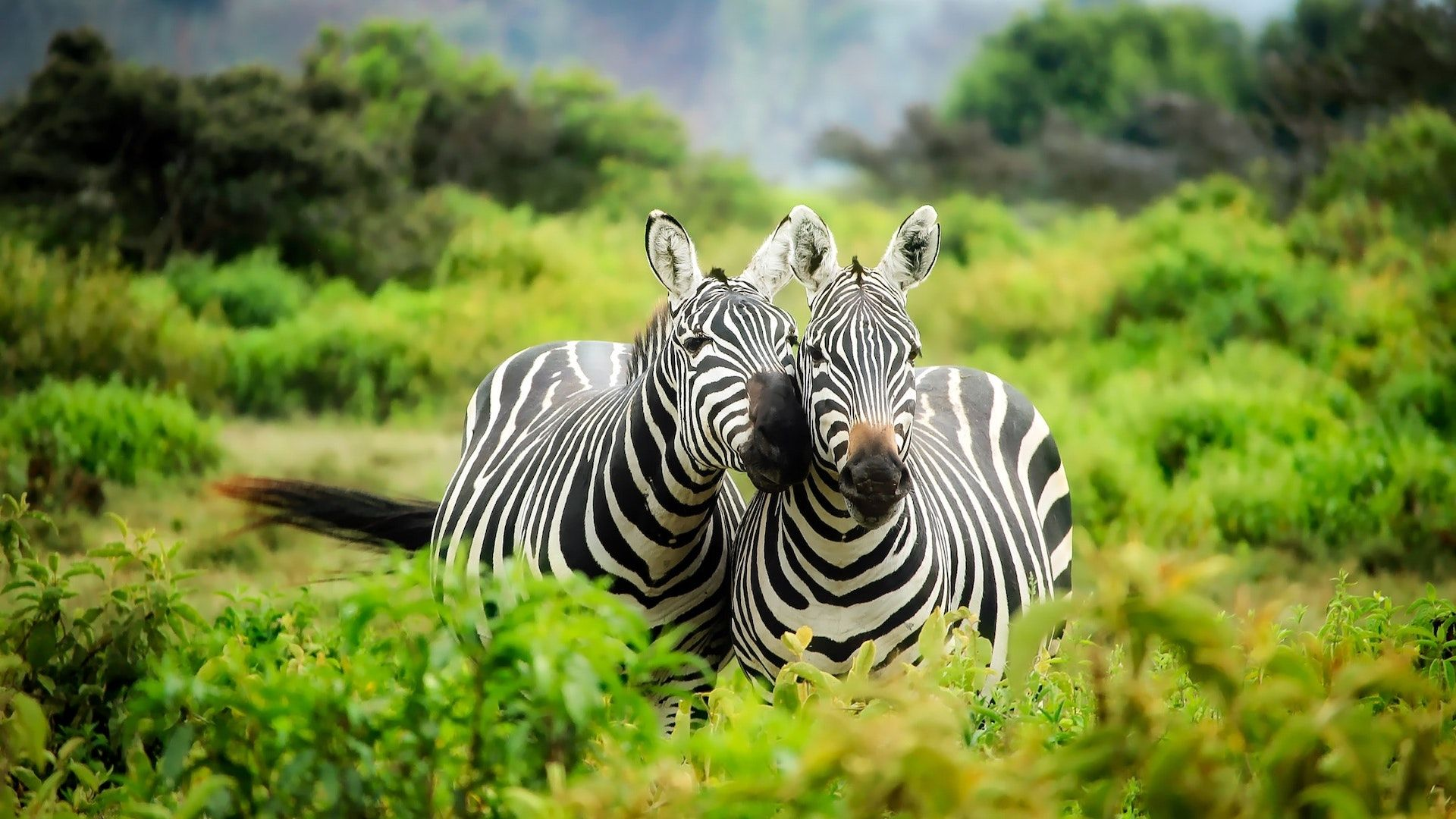 ¿Cuáles son los mejores países de África para hacer un safari?