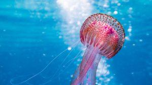 Grecia tendrá su primer museo arqueológico submarino