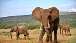 Cinco consejos para un primer viaje a África