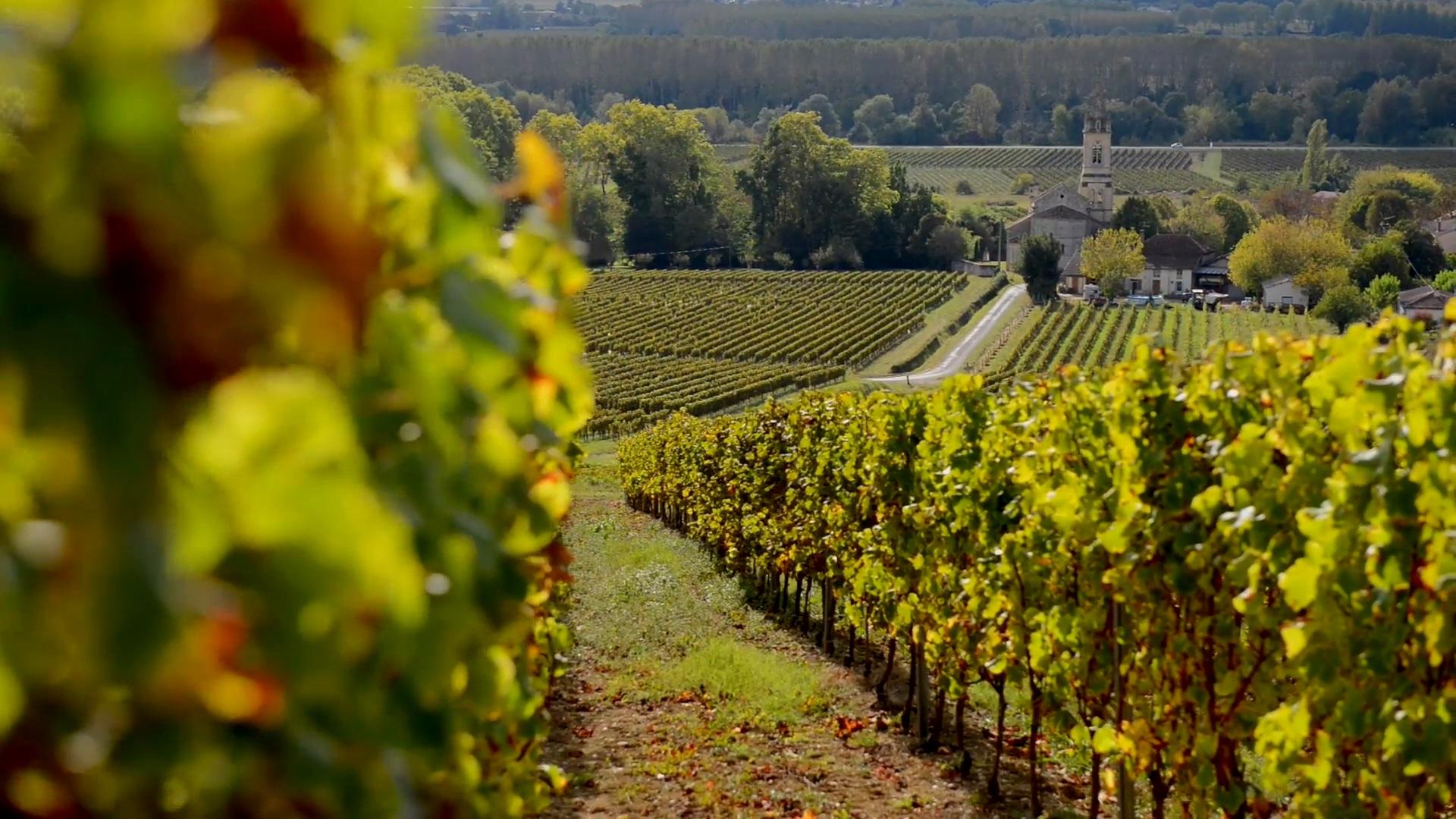 Cinco razones para visitar Burdeos, la capital mundial del vino