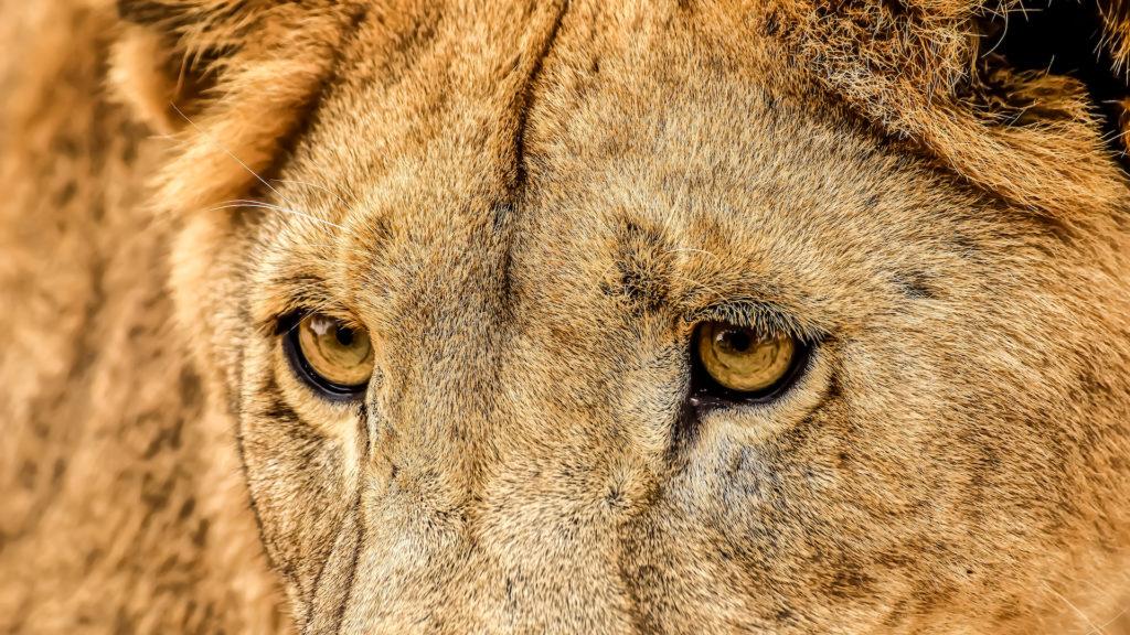 REVIEW Lion & Safari Park: una de las principales atracciones de Sudáfrica