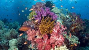 Belleza marina: los mejores arrecifes de coral en el mundo