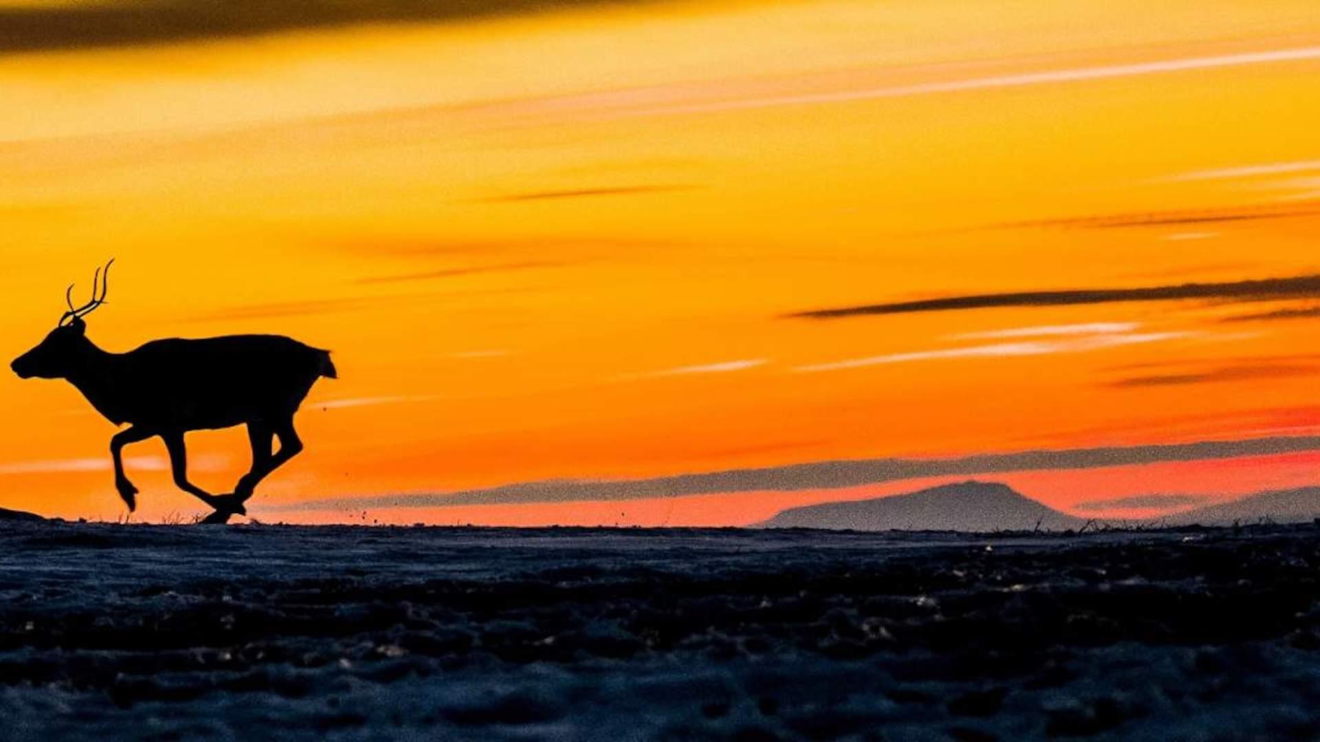 Los mejores lugares para ver el sol de medianoche en Noruega