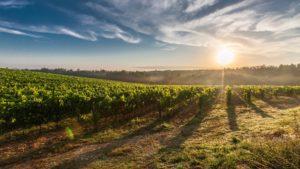 Las mejores rutas del vino en Chile