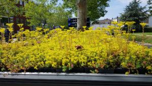 La ciudad que transformó más de 300 paradas de autobús con techos para abejas