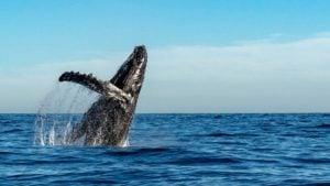 Turismo ecológico en Chile: algunos de los animales de su fauna natural