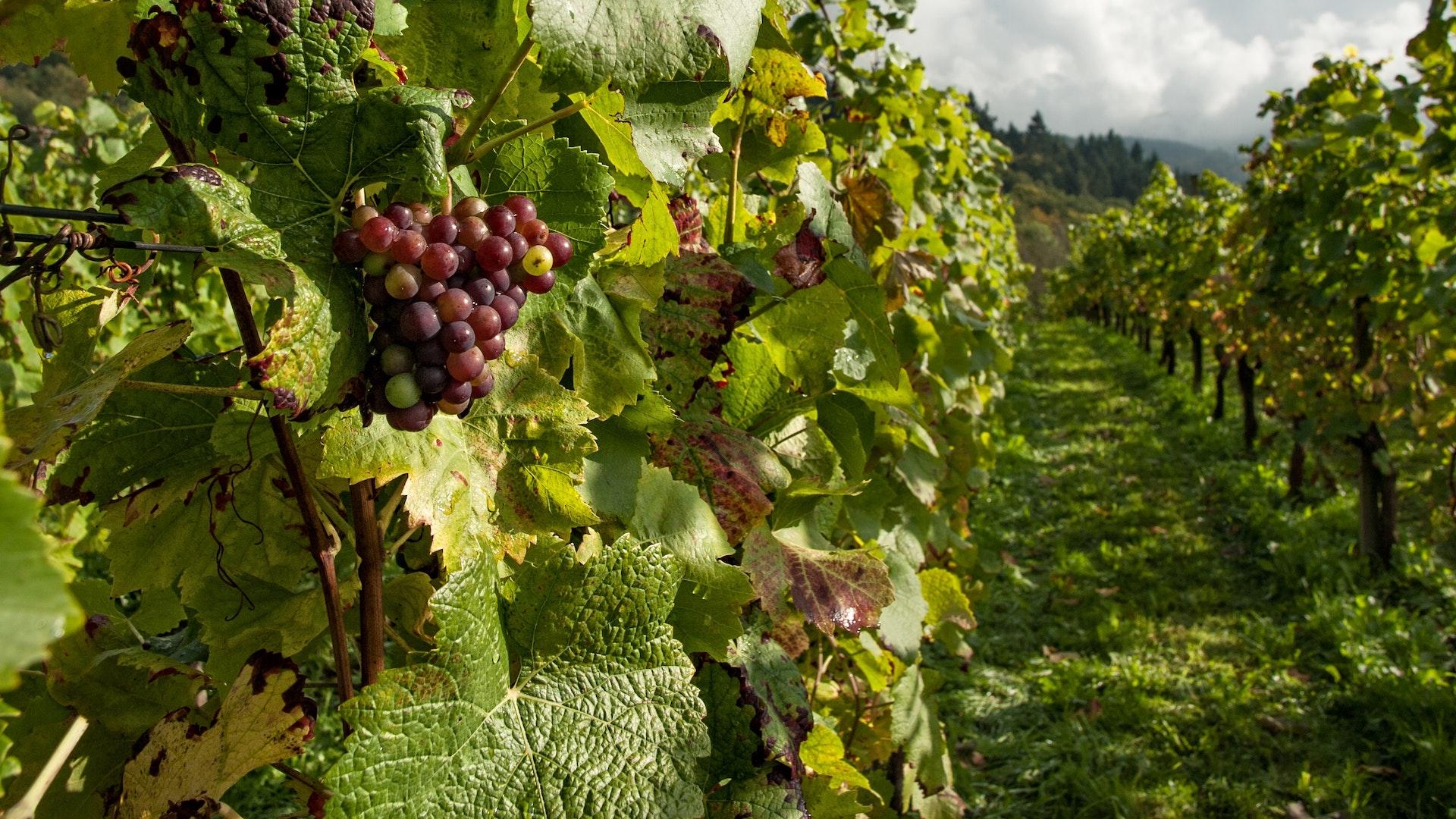 Estos son los mejores viñedos del mundo 2019: Latinoamérica, líder