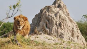 Cinco de las mejores experiencias de safaris en África