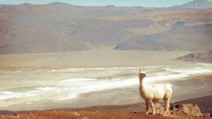 Los mejores circuitos para hacer en Antofagasta de la Sierra
