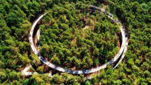 El fantástico paseo elevado entre árboles para pasear en 360 grados
