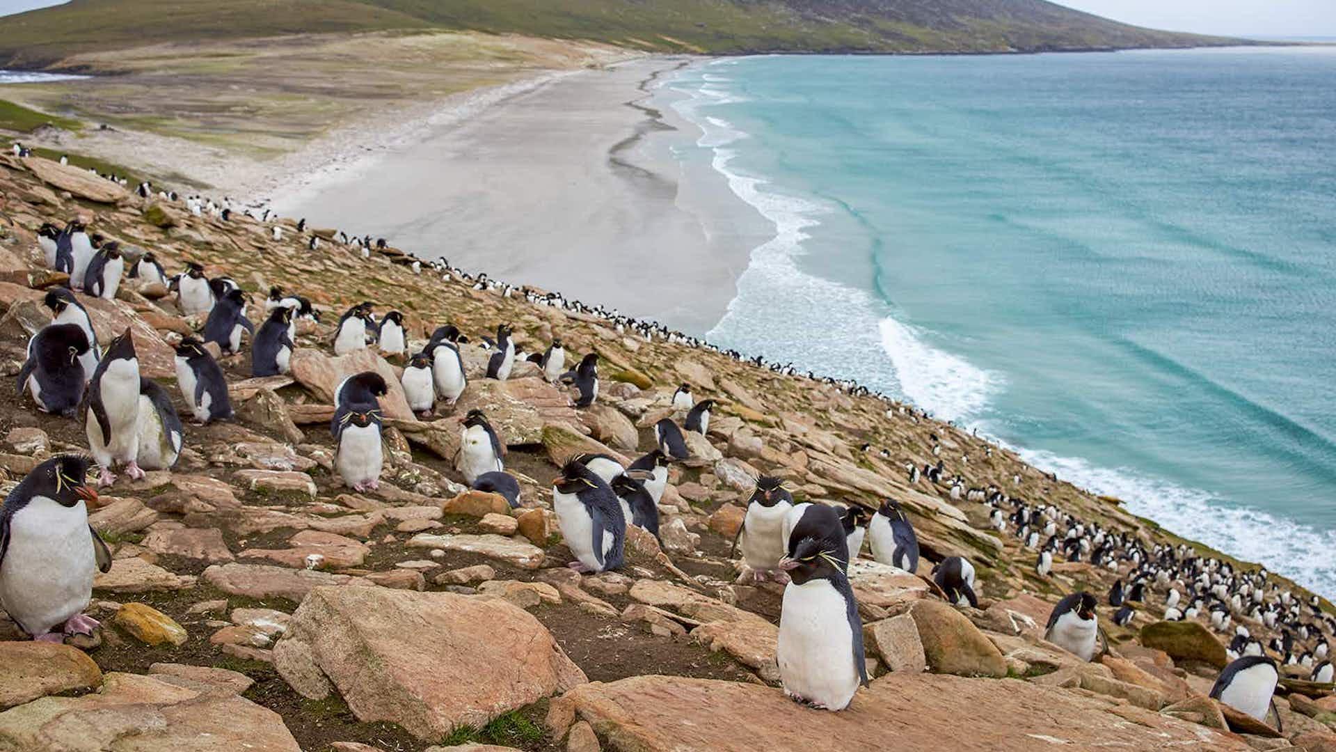 LATAM lanzó nuevo vuelo a las Islas Malvinas desde San Pablo y Córdoba