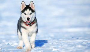 La nueva fórmula para calcular los años de perros en años humanos