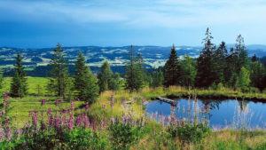 ¿Qué hacer en el Parque Nacional de la Selva Bávara, en Alemania?