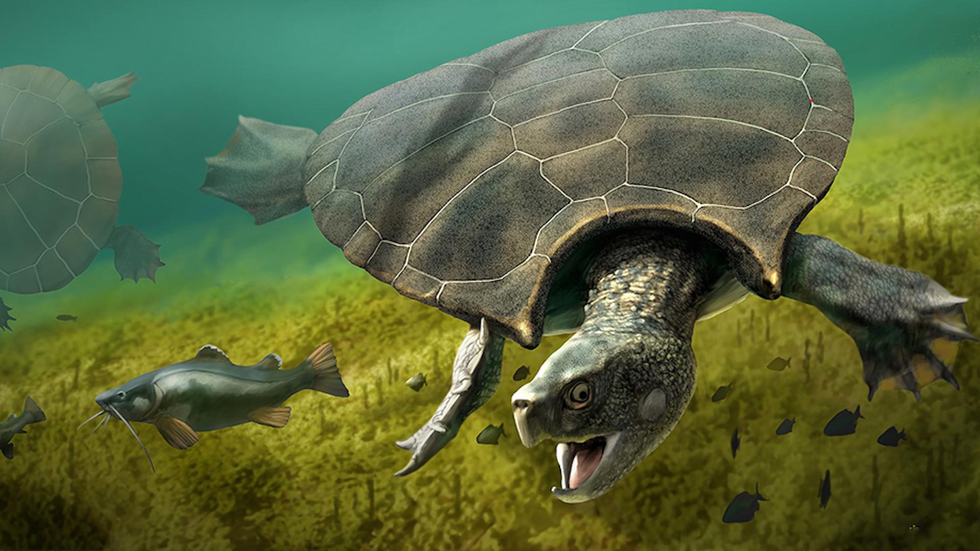 Descubren la tortuga más grande del mundo: 2.4 metros de caparazón