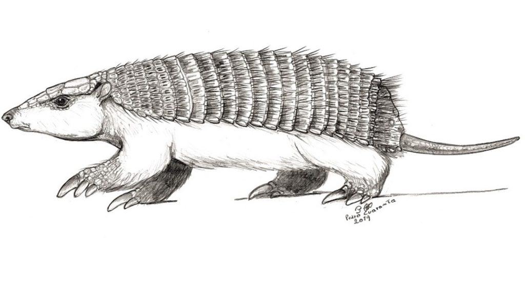 Encontraron el primer fósil de pichiciego, el armadillo más pequeño del mundo