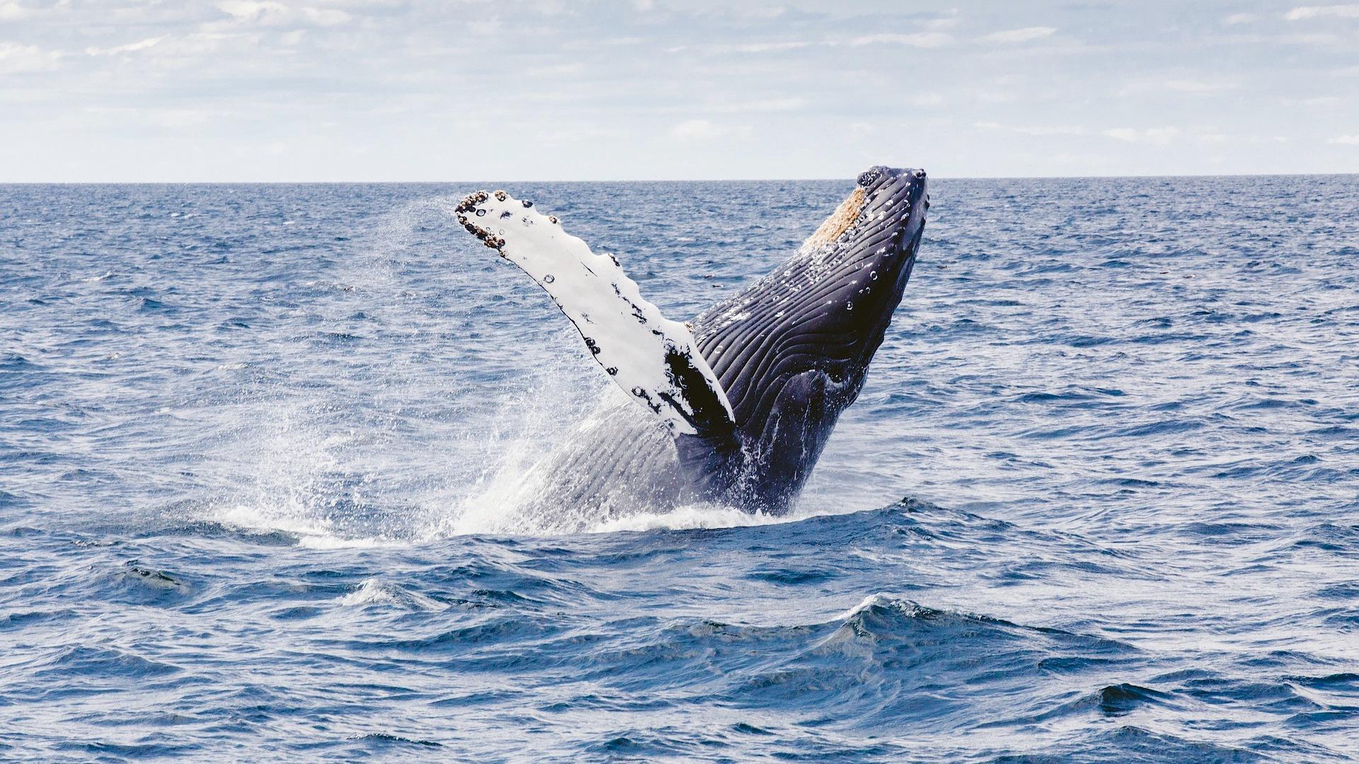 Los mejores destinos para ver ballenas en Brasil