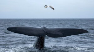 ¿Qué hacer en Puerto Madryn? Ballenas, buceo, naturaleza y más