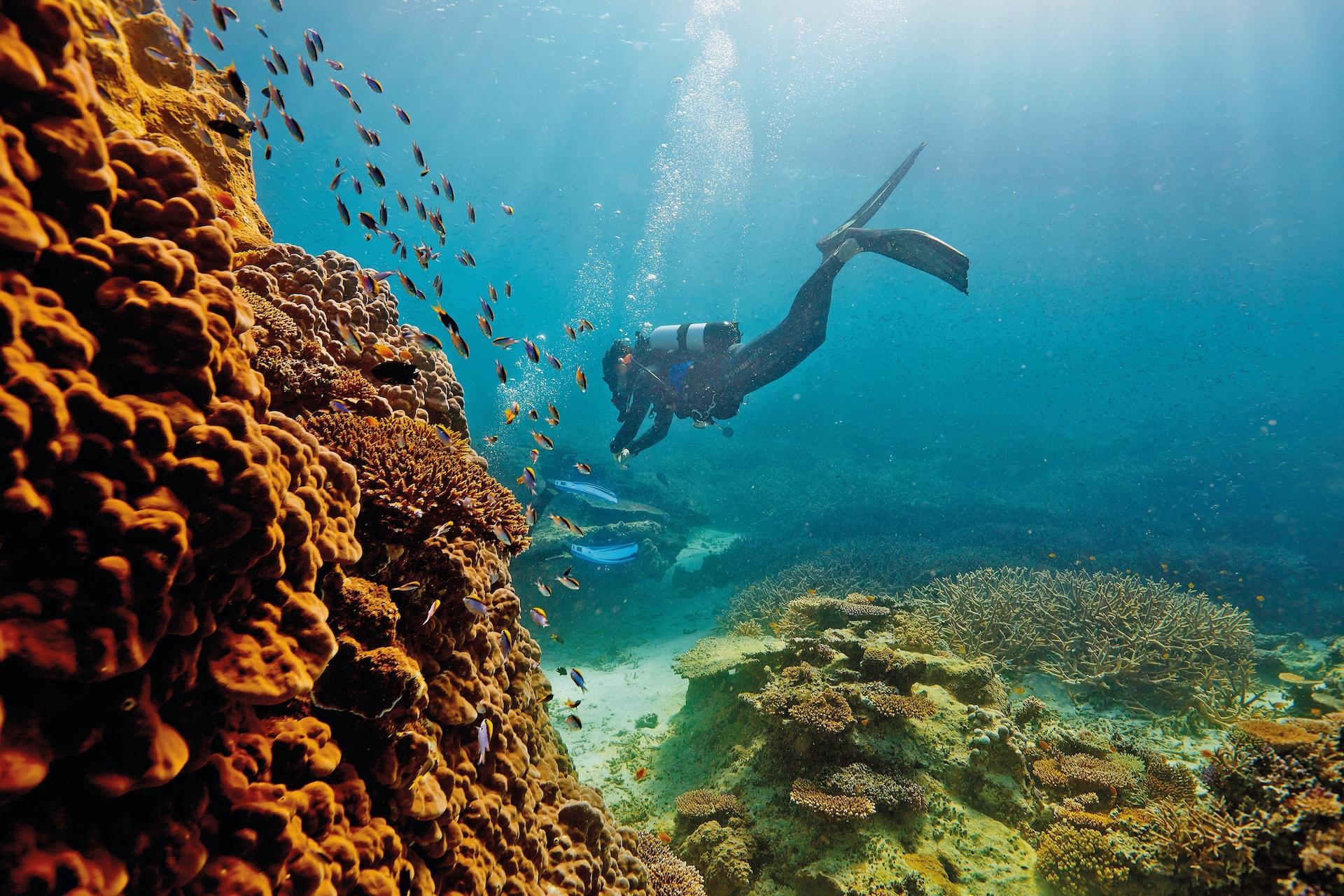 Descubrieron un arrecife de coral más alto que un rascacielos