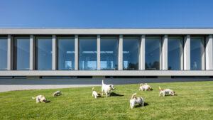 Este es uno de los mejores hoteles para perros y gatos del mundo