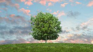 Plantan 600 árboles y la bodega BordeRio invita a ponerles un nombre