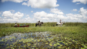 Turismo en Argentina: ¿qué hacer en los Esteros del Ibera?