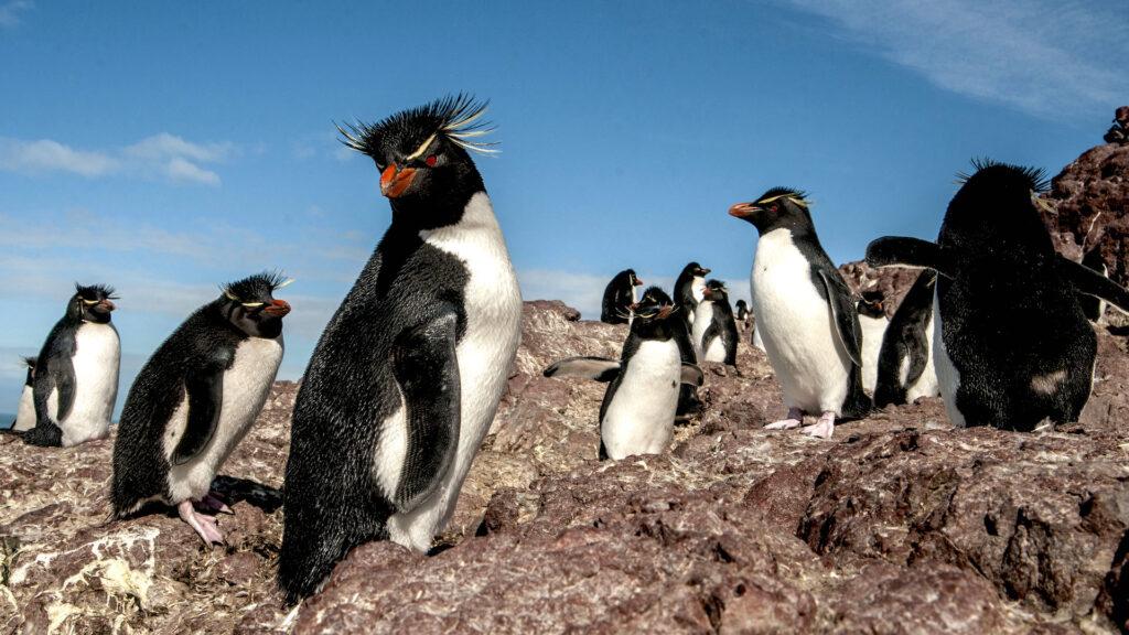 Qué hacer en Puerto Deseado, la Galápagos de la Patagonia Argentina