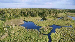 Así es el Parque Nacional Everglades, en el estado de Florida