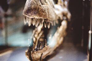 Así es el dinosaurio más grande del mundo, encontrado en Argentina